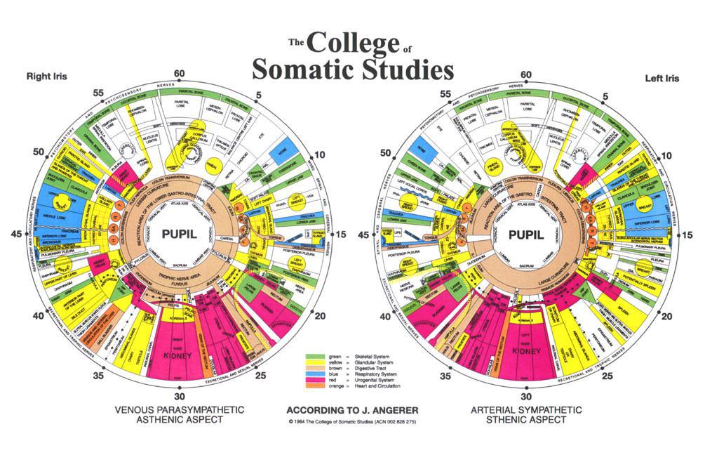 Large Non Laminated Eye Diagnosis Wall Chart Iridology Textbook